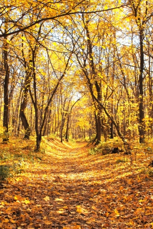 Beautiful landscape - autumn forest Stock Photo