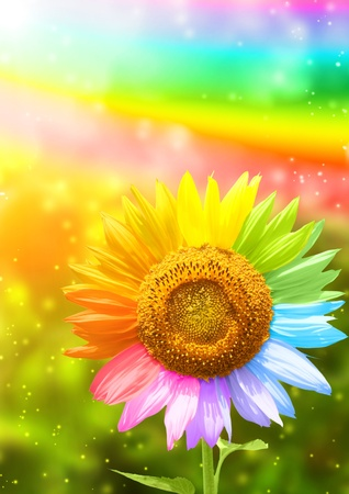 golden daisy: Petals of a sunflower painted in different colors Stock Photo
