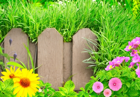 palisade: Summer background with old wooden fence, flower and green grass Stock Photo