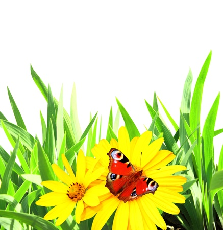 Summer flowers, green grass and butterfly. Isolated over white Stock Photo - 20640478