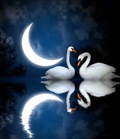 Two white swans on black background photo