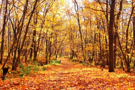 autumn landscape: Beautiful landscape - autumn forest Stock Photo