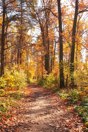 Beautiful landscape. Road in autumn forest Stock Photo