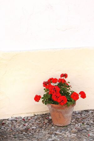 geranium: Flowerpots with geranium and stucco wall