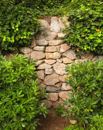 ivy wall: Ivy and the ancient stone wall