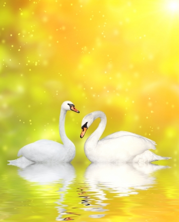 mute swan: Two white swans Stock Photo