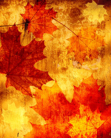 autumn grunge: Grunge background with autumn maple leaves