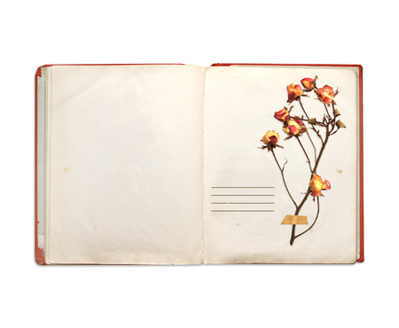 Old book and dried flowers of rose. Objects isolated on white background photo