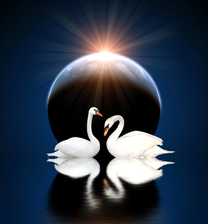 Two white swans on black background Stock Photo - 23983588
