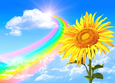 Rainbow and sunflower in the blue sky photo
