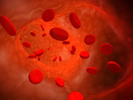 erythrocytes: Many red erythrocytes, floating on an artery