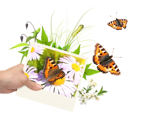 butterfly hand: Summer frame with photo, green leaves, flowers and insects. Isolated on white background