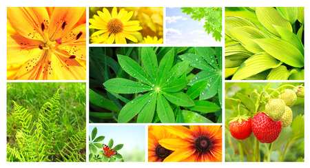 Collection of photos with summer flowers, green leaves and butterfly Stock Photo - 28677690
