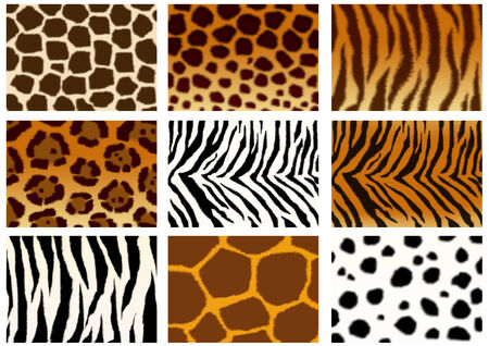 Set of animals skins textures  Stock Photo