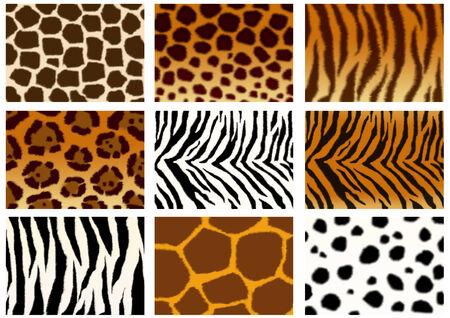 strip a dog: Set of animals skins textures  Stock Photo