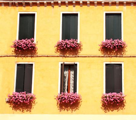 Six windows with geranium photo