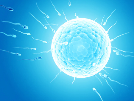 Spermatozoons, drijvend tot eitje - 3d render Stockfoto