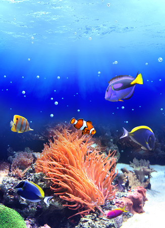 Underwater scene with anemone and tropical fish Stock Photo