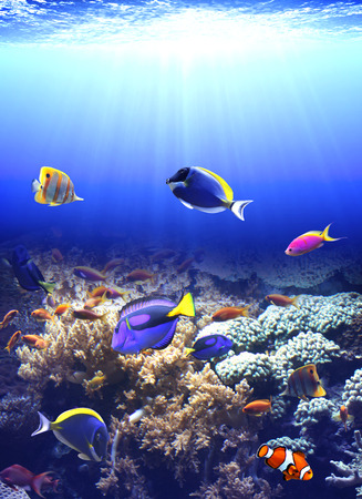 paracanthurus: Underwater scene with beautiful tropical fish