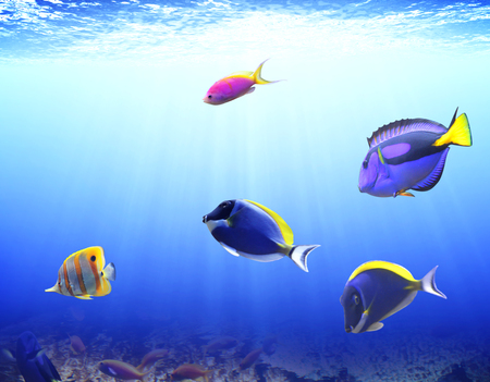 hepatus: Underwater scene with beautiful tropical fish