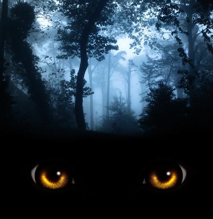 Dark series - a look from darkness photo