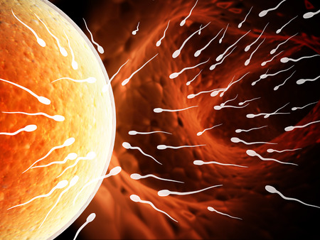 animal sex: Spermatozoons, floating to ovule