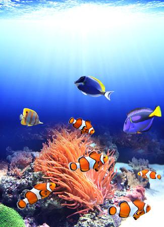 바다 말미잘과 바다에서 광대 물고기