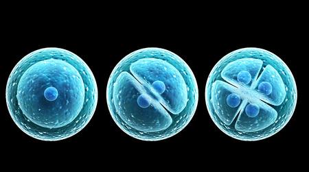 細胞の分裂をプロセス。黒の背景上に分離されて