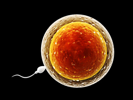 fertilisation: Spermatozoon, floating to ovule - 3d render Stock Photo
