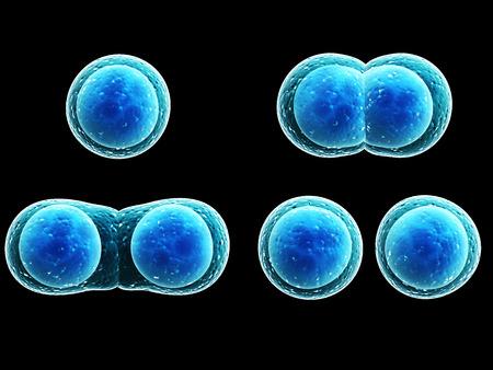 membrana cellulare: Divisione Processo di cellulare. Isolato su sfondo nero