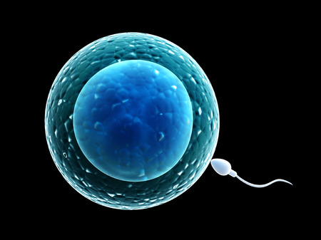 sex activity: Spermatozoon, floating to ovule - 3d render Stock Photo
