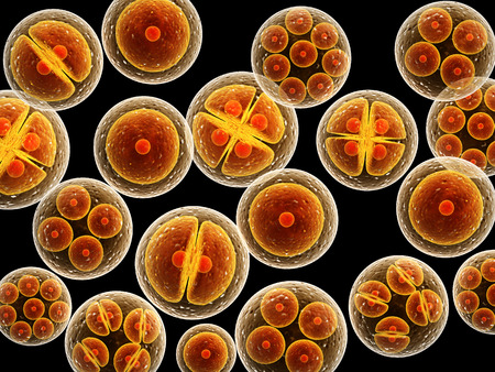 Process division of cell. Isolated on black background Stock Photo - 37841634