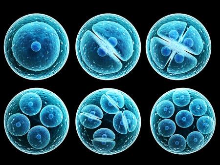 cell: Process der Zelle. Isoliert auf schwarzem Hintergrund