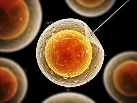 Cell injection - artificial insemination photo