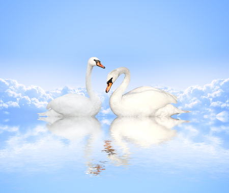 mute swan: Mute swan on blue water and background with clouds Stock Photo