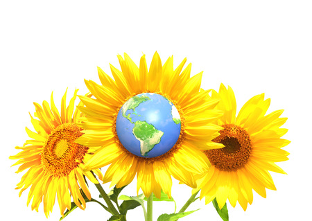 yellow earth: Three bright yellow sunflowers and Earth. Isolated on white background. Elements of this image furnished by NASA