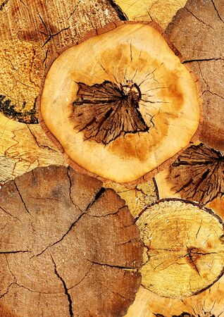 sawed: Background with texture cut of a logs Stock Photo