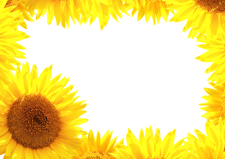 golden daisy: Border with yellow sunflowers. Isolated on white background Stock Photo