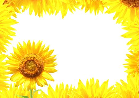 flower border: Border with yellow sunflowers. Isolated on white background Stock Photo