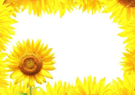 borde de flores: Frontera con girasoles amarillos. Aislado en el fondo blanco
