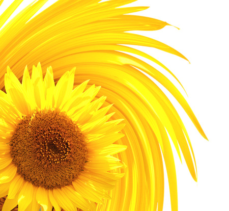 daisies: Decorative background with sunflower. Isolated over white background