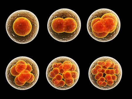 zygote: Process division of cell. Isolated on black background