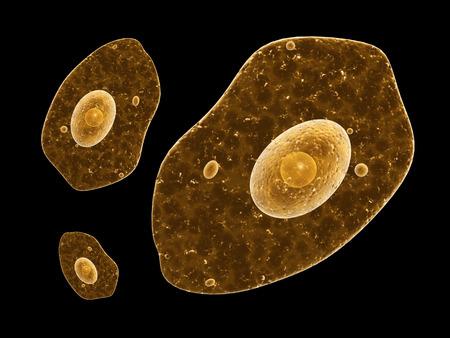ameba: Amoeba sobre fondo negro. 3d