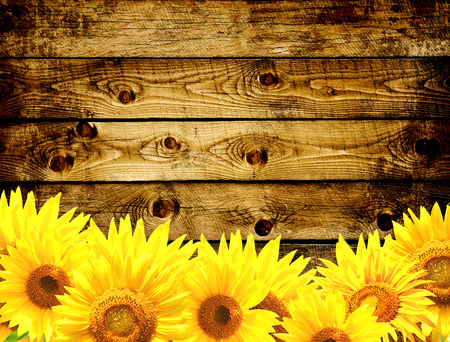 Grunge background - wooden texture and border with yellow sunflowers Stock Photo