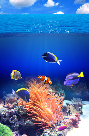 hepatus: Underwater scene with anemone and tropical fish Stock Photo