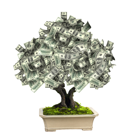 miracle tree: 3d money tree with dollar banknotes. Isolated on white background