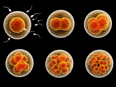 Divisione del processo di cellule fecondate. Isolato su sfondo nero Archivio Fotografico