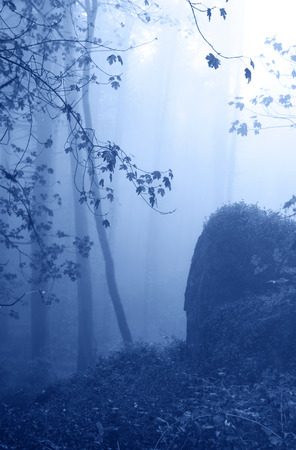 non urban: Mysterious landscape of foggy forest