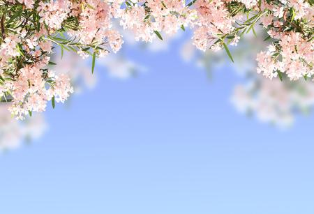 pink flowers: Pink flowers on blue sky