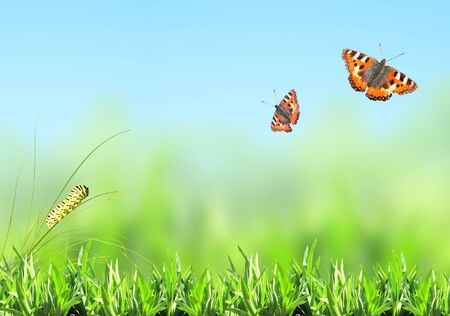 Green grass, caterpillar and butterfly on nature blurred background